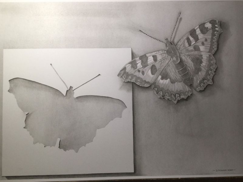 'Fly Away' a Pencil study Trompe l'oeil style of a butterfly